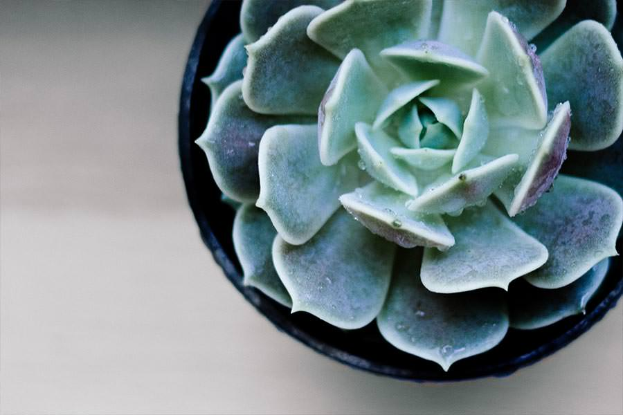 holiday-gift-ideas-succulent