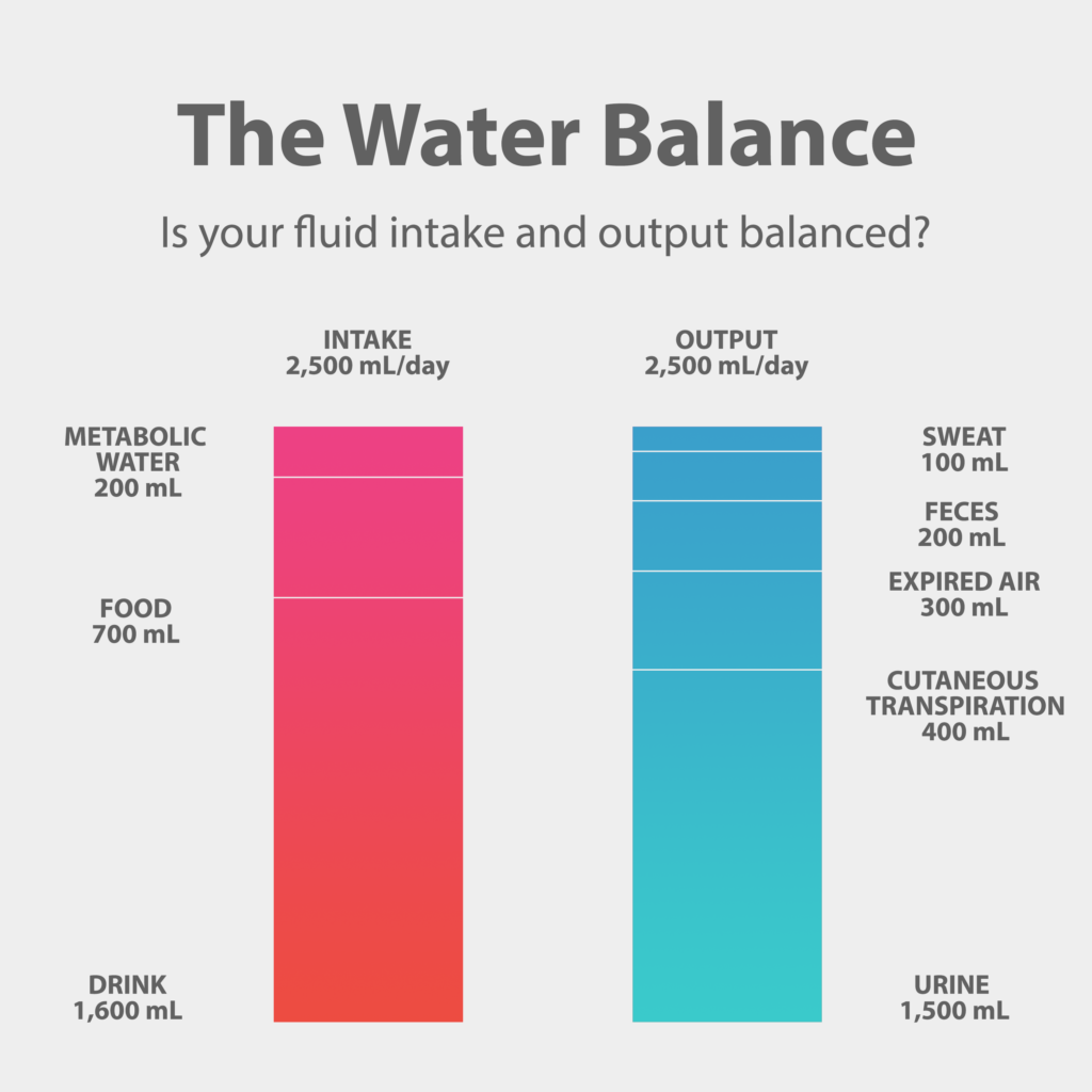 The Water Balance