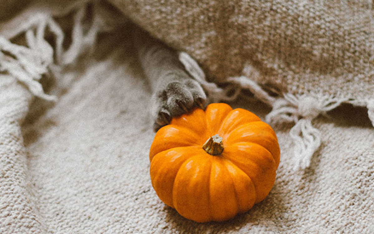 fall-foods-boost-immune-system-pumpkin-blanket-aliat